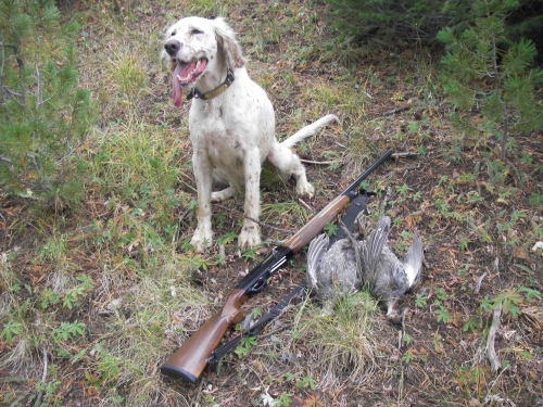 A great gun and a great dog and a couple great birds. Monte, Sage and blues in the Wyoming Range, 2007.