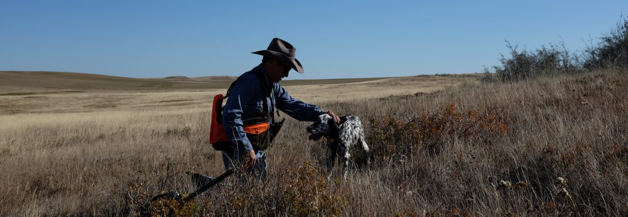 Courtesy Ford Pocatello >> Mouthful of Feathers – Upland in the West